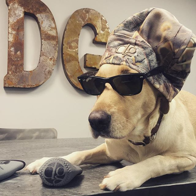 """Ruff"" life #steeleybird!  Are we at @oldemeckbrew yet?  #shopdog #dunstangroup #promoseverywhere #customeverything"