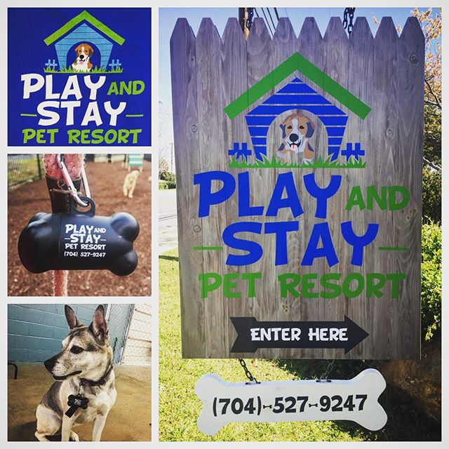 What better way to celebrate National Puppy day than visiting our furry friends over at @playandstaypetresort #NiceGear #Customeverything #dunstangroup #puppy